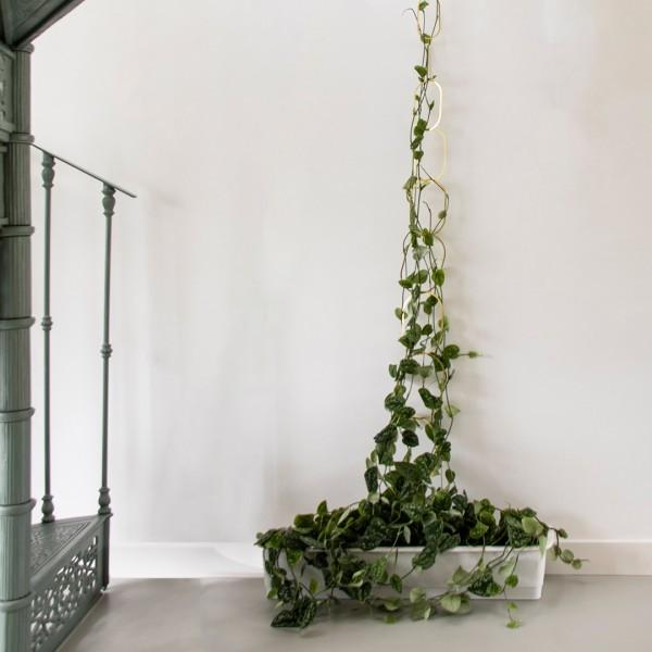 Rankhilfe aus Messing für Kletterpflanzen